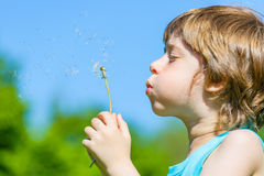 Boy blowing dandelion. Cute Boy blowing dandelion seeds in the park Royalty Free Stock Photography