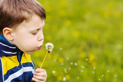 Boy blowing on dandelion. On green background Stock Image