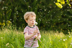 Boy blowing dandelion seeds. Little boy blowing dandelion seed for a wish on a meadow outdoors in summer Royalty Free Stock Images