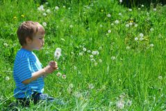Boy blowing dandelion seeds Royalty Free Stock Photo