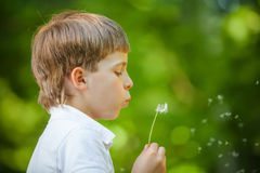 Boy blowing dandelion in summer day Royalty Free Stock Image