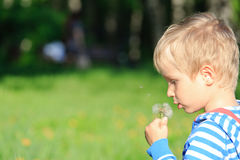 Boy blowing dandelion on summer day Royalty Free Stock Photo
