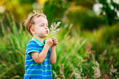 Boy blowing on a dandelion in the summer in the park Stock Photos