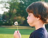 Boy Blowing Seeds Stock Photo