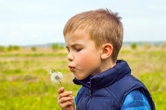 Boy is blowing on white dandelion Royalty Free Stock Photography