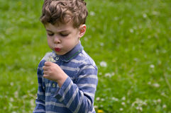 Boy blows on the dandelion. Boy hold in hend dandelion and blow on it. He blow out his cheeks. He is dressed in blue stripy shirt. He is curly-headed. Background Royalty Free Stock Photography