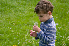 Boy blows on the dandelion. Boy hold in hend dandelion and blow on it. He blow out his cheeks. He is dressed in blue stripy shirt. He is curly-headed. Background Royalty Free Stock Photo
