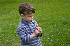 Boy blows on the dandelion. Boy hold in hend dandelion and blow on it. He is dressed in blue stripy shirt. He is curly-headed Royalty Free Stock Photos