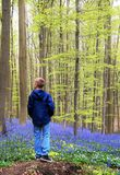 Boy in the blue forest Stock Photos
