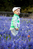 Boy in Bluebonnets Stock Photos