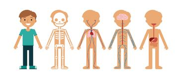 Boy body anatomy vector illustration. royalty free illustration