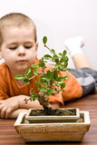 Boy and the bonsai Royalty Free Stock Photos