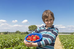 Boy with a bowl of strawberries. On a strawberry field Stock Images