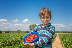 Boy with a bowl of strawberries. On a strawberry field Royalty Free Stock Image