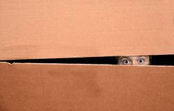 Boy in box. Scared boy hidden in a paper box lurking through a gap royalty free stock images