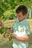 Boy with a branch in his hand Royalty Free Stock Photos
