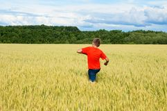 The boy in a bright T-shirt runs along the yellow field where ears of grain grow, the grain against the blue sky, the rear view. Warm, summer day Royalty Free Stock Photography
