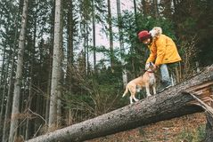 Boy in bright yellow parka walks with his beagle dog in pine for. Est on the falling tree royalty free stock image