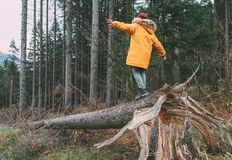 Boy in bright yellow puffer jacket walks in pine forest balancing on the falling tree. People and Nature concept image. stock images
