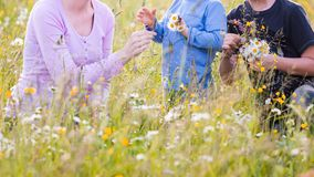 Children picking flowers on a meadow royalty free stock images