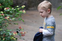Boy and butterfly Stock Image