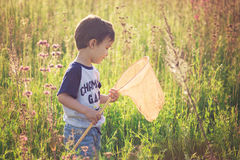 Boy with butterfly net Butterfly catches. Cheerful kid playing in a field with Insect net in summer. butterfly net catch butterflies Royalty Free Stock Photos