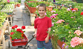 Boy Buying Flowers Stock Photos