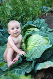 Boy in a cabbage. A boy sits in a cabbage on a background a vineyard Royalty Free Stock Photos