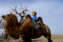 Boy on Camel Stock Image