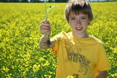 Boy in canola field Royalty Free Stock Images