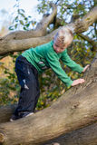 Boy carefully climbing tree Stock Photos