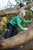 Boy carefully climbing tree Royalty Free Stock Photo