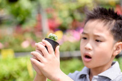 Boy carry cactus Stock Photography