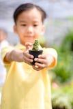 Boy carry cactus Stock Photo
