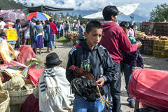 A boy carrying a chicken which he hopes to sell at the Otavolo animal market in Ecuador, South America. Stock Photography