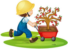 A boy carrying tree. Illustration of a boy carrying tree in a trolley Royalty Free Stock Image