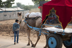 The boy and the cart. Rajasthani boy with his camel cart Royalty Free Stock Images