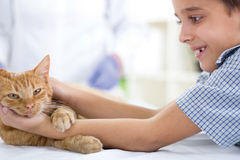 Boy with a cat at home Royalty Free Stock Photography