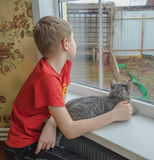 Boy and a cat looking out the window Royalty Free Stock Images