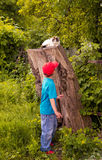 Boy and Cat Royalty Free Stock Photography