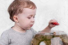 Boy catches fish in aquarium Stock Photos