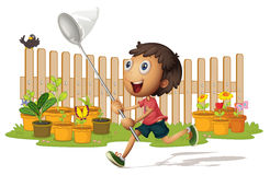 Boy catching butterflies Royalty Free Stock Images