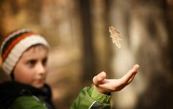 Boy catching a falling leaf Royalty Free Stock Photography