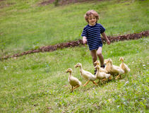 Boy chasing ducklings. Stock Photography