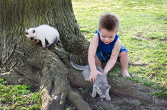 Boy chasing kittens Royalty Free Stock Images