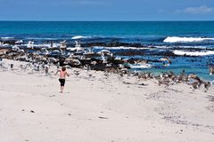 Boy chasing seagulls Stock Photography