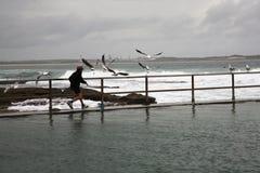 Boy chasing seagulls Royalty Free Stock Photos