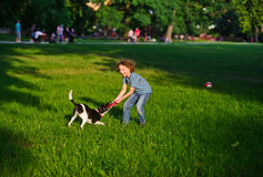 The boy cheerfully plays with the dog in park in the summer. The dog to seize teeth at frisbee which is held in hand by her owner. Boy and dog delighted with Royalty Free Stock Photo