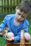Boy and chicken Royalty Free Stock Photo
