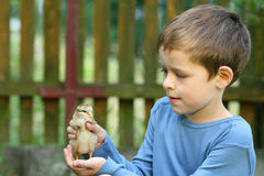 Boy and chicken Royalty Free Stock Photography